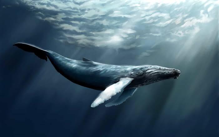 الحوت الرمادى