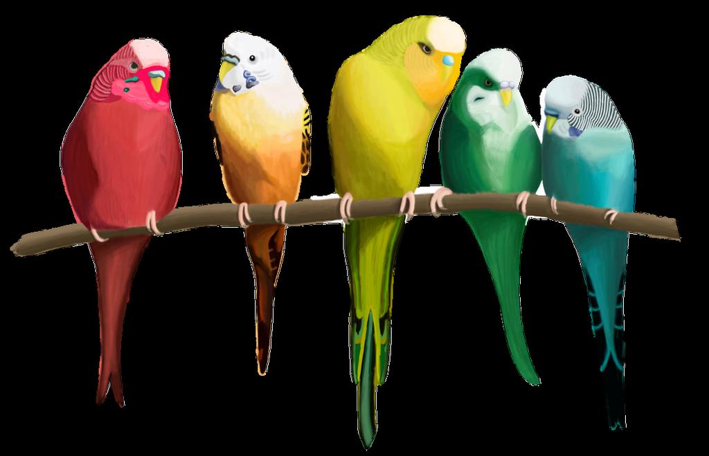 انواع طيور الزينه