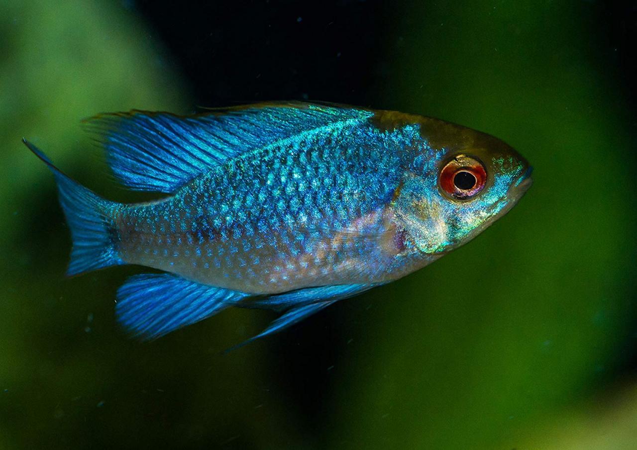 7 - اسماك المياه العذبة