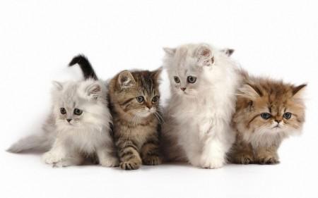 اجمل الصور القطط