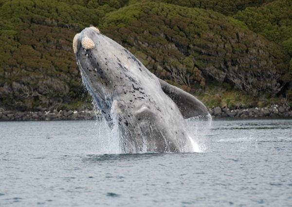 الحوت الصائب