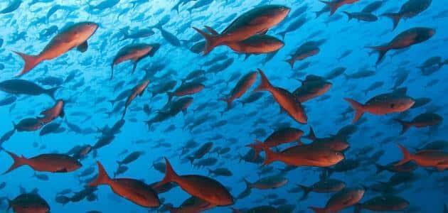 انواع الاسماك