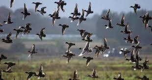 انواع الطيور التى تطير