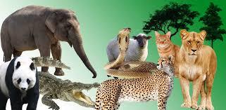 الحيوانات المفترسه