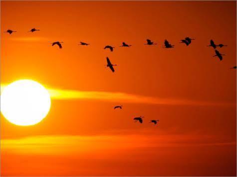 الطيور التى تطير