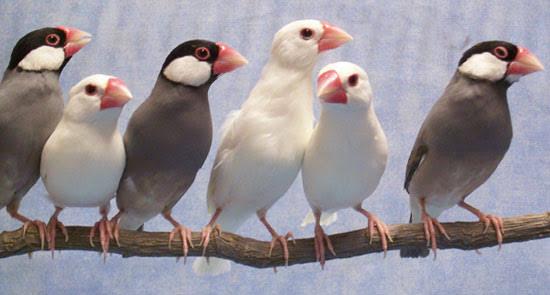 انواع الطيور