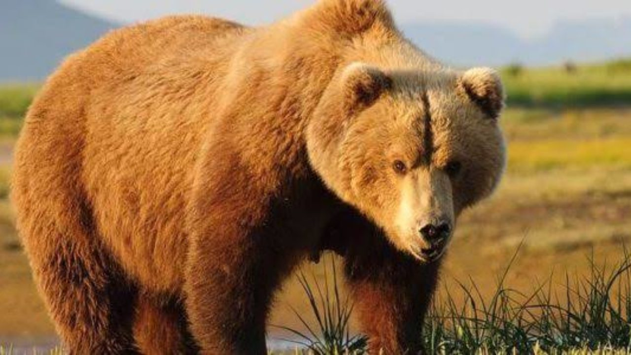انواع حيوانات تأكل اللحوم بالصور والمعلومات طبيعة