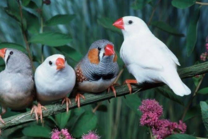 عصافير طيور الجنه