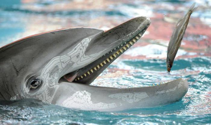 غذاء وتكاثر الدلافين