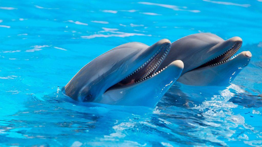 تكاثر وغذاء الدلافين