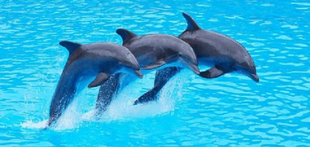 فوائد صوت الدلافين