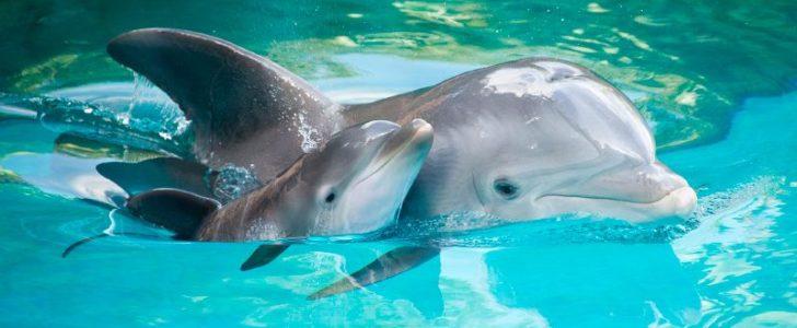 غذاء وتكاثر الدلفين