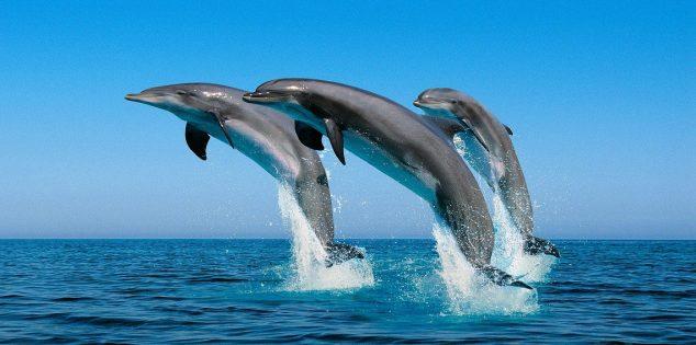 صفات الدلافين