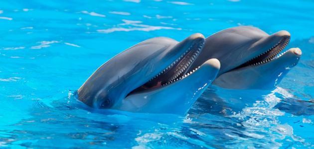 صوت الدلافين