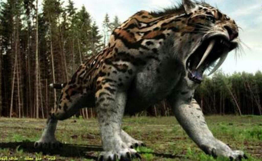 القط الذي يشبه النمر السميلودون