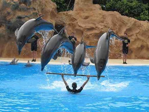 معلومات عن  الدلافين للاطفال