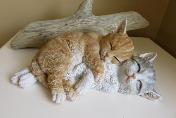 تزاوج القطط عن قرب