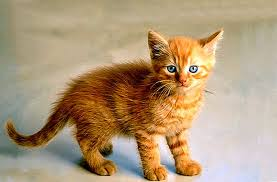 عمر القطط