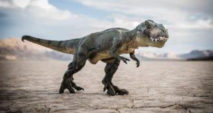 الجيجانتوصور