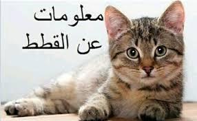 معلومات عن القطط
