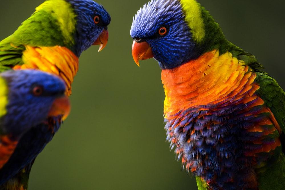 صور طيور