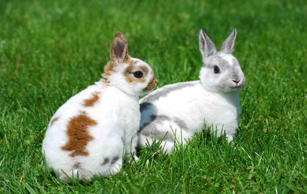 صور ارانب