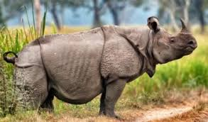 صور وحيد القرن