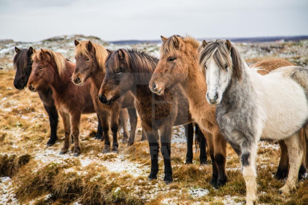 صور الحصان
