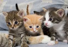 صور صغير القطط