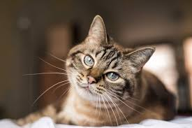 خلفيات قطط جميله