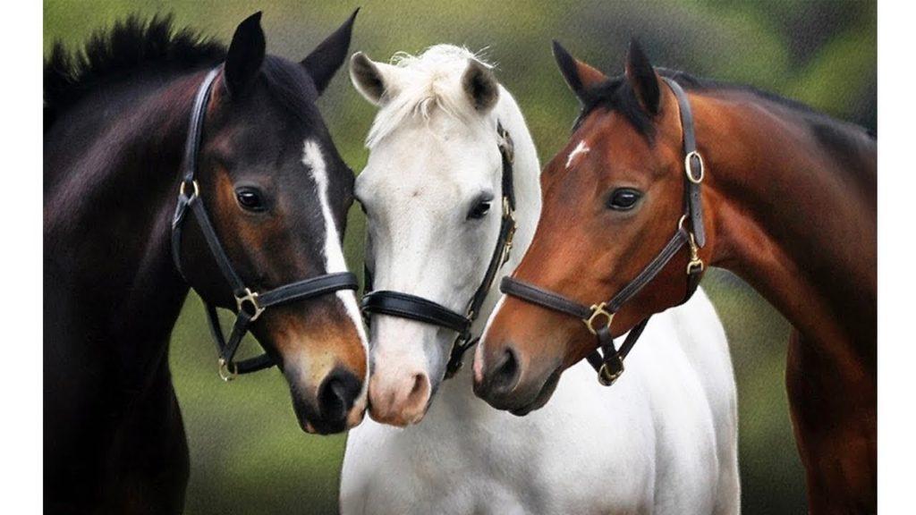 صور الخيول