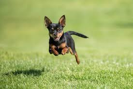 صور كلاب صغار
