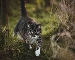 تصرافات القطط ومعانيا