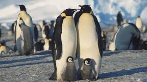 صور البطريق