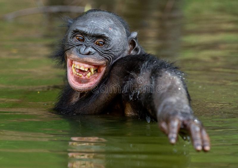 صور قرد يضحك