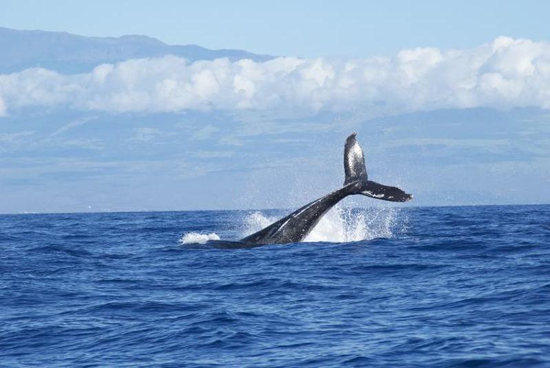 صور الحوت الارزق