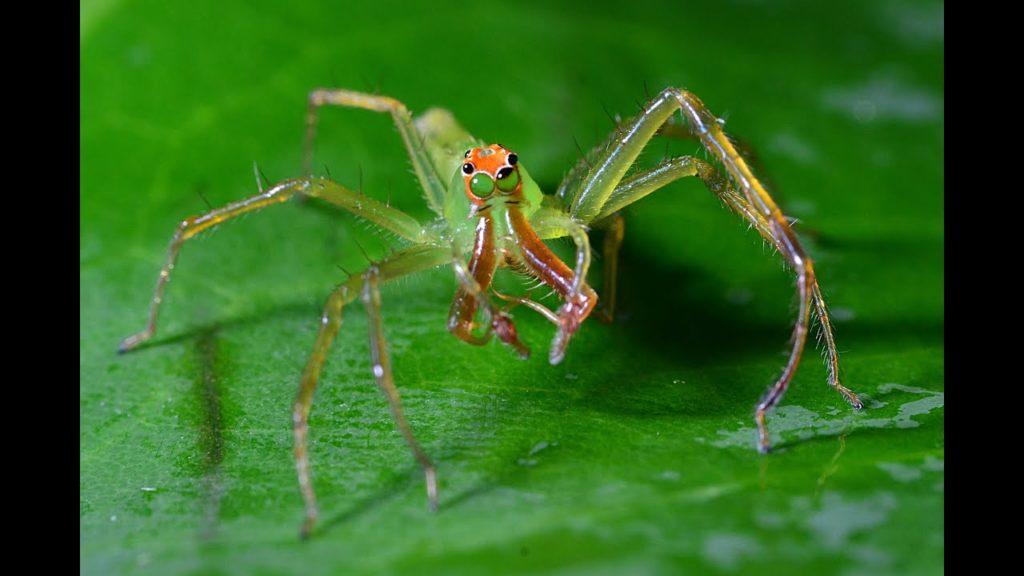 صور العنكبوت