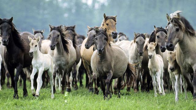 صورالحصان