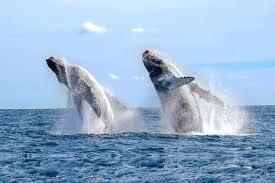 صور الحوت الازرق
