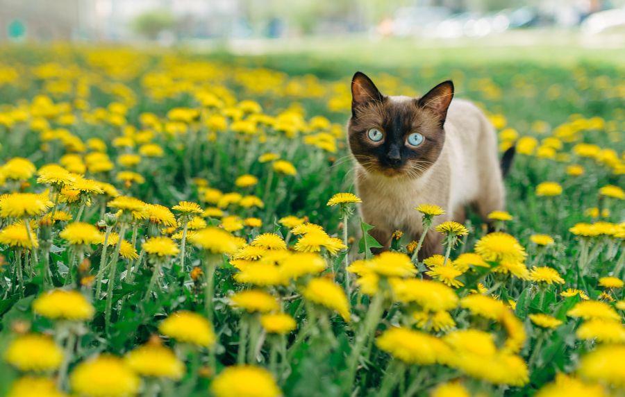 صور قطه صغيره