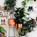 نباتات منزليه