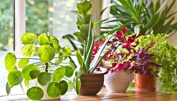 اسماء النباتات