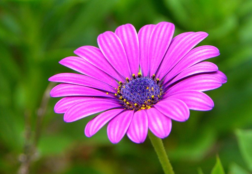 اجمل وردة