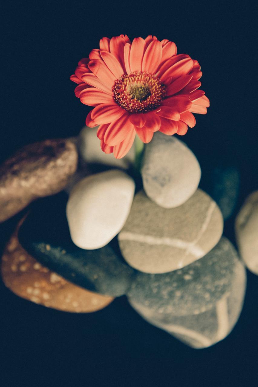 الورد للورد