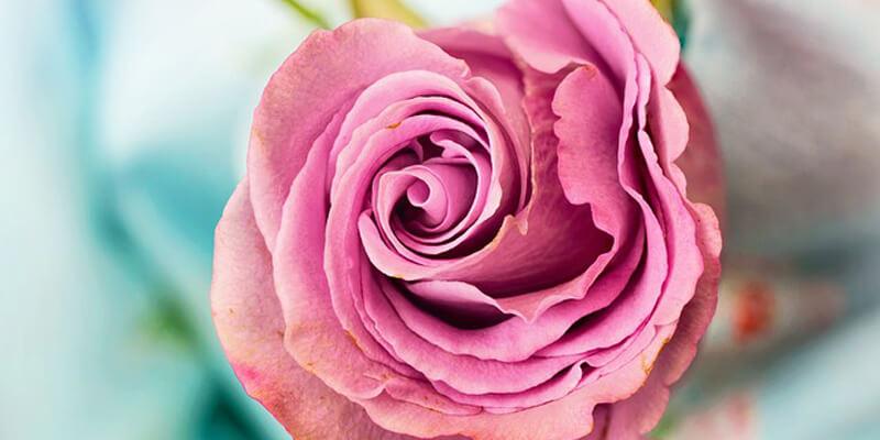 اسماء وانواع الزهور
