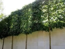 شجر صناعى جدارى