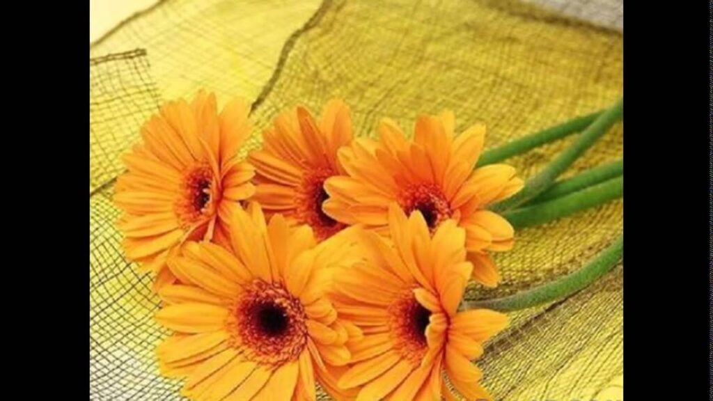 زهور صفراء