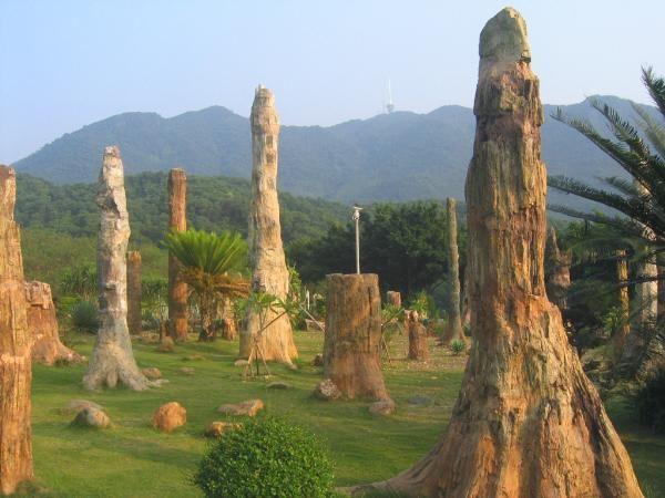 الاشجار الحجريه