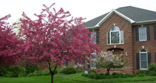 اشجار زينه للبيت