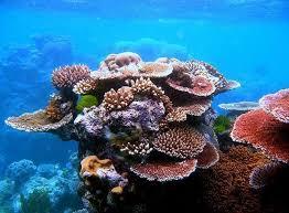 الكائنات البحرية